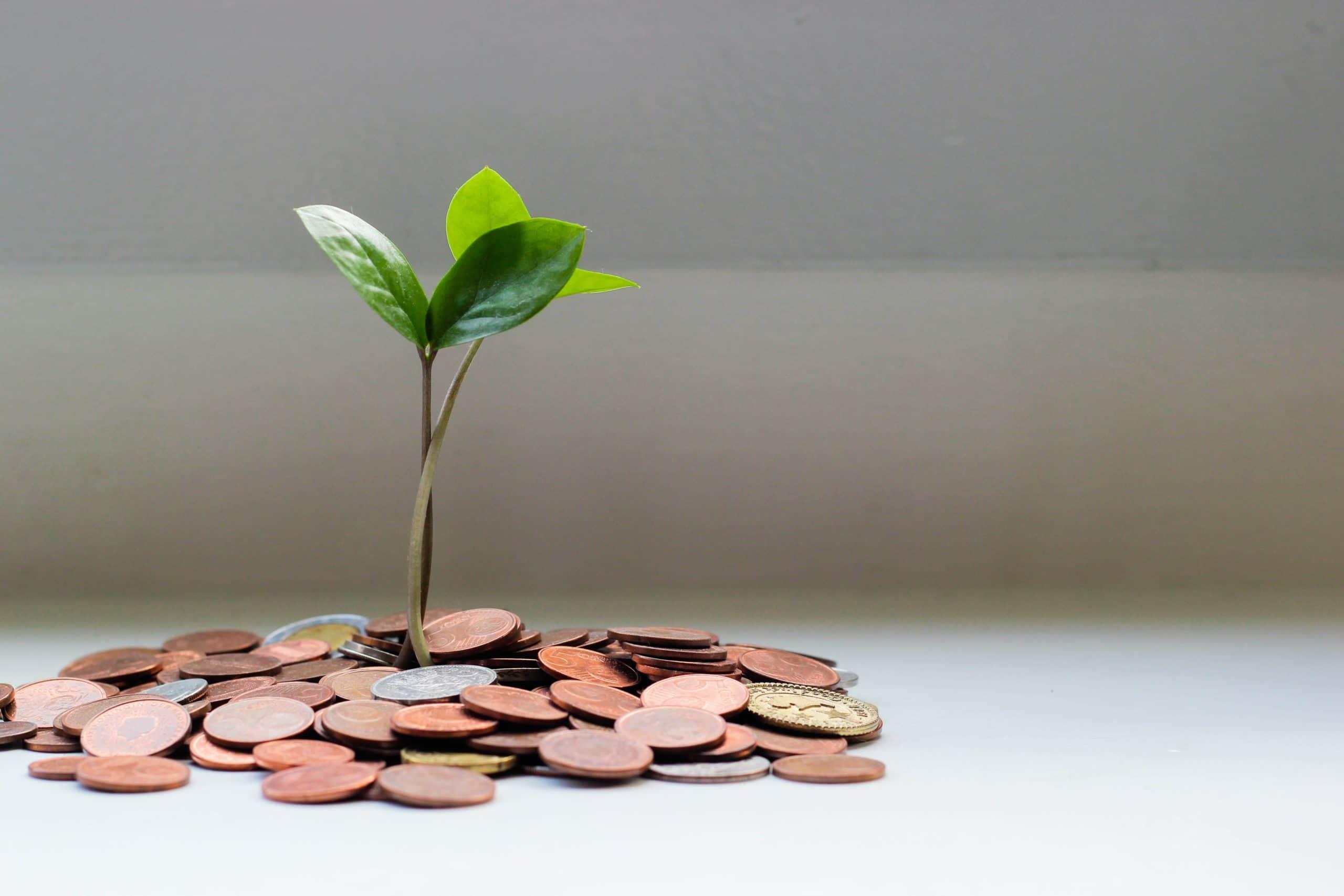 Foto von Micheile Henderson - green plant on brown round coins