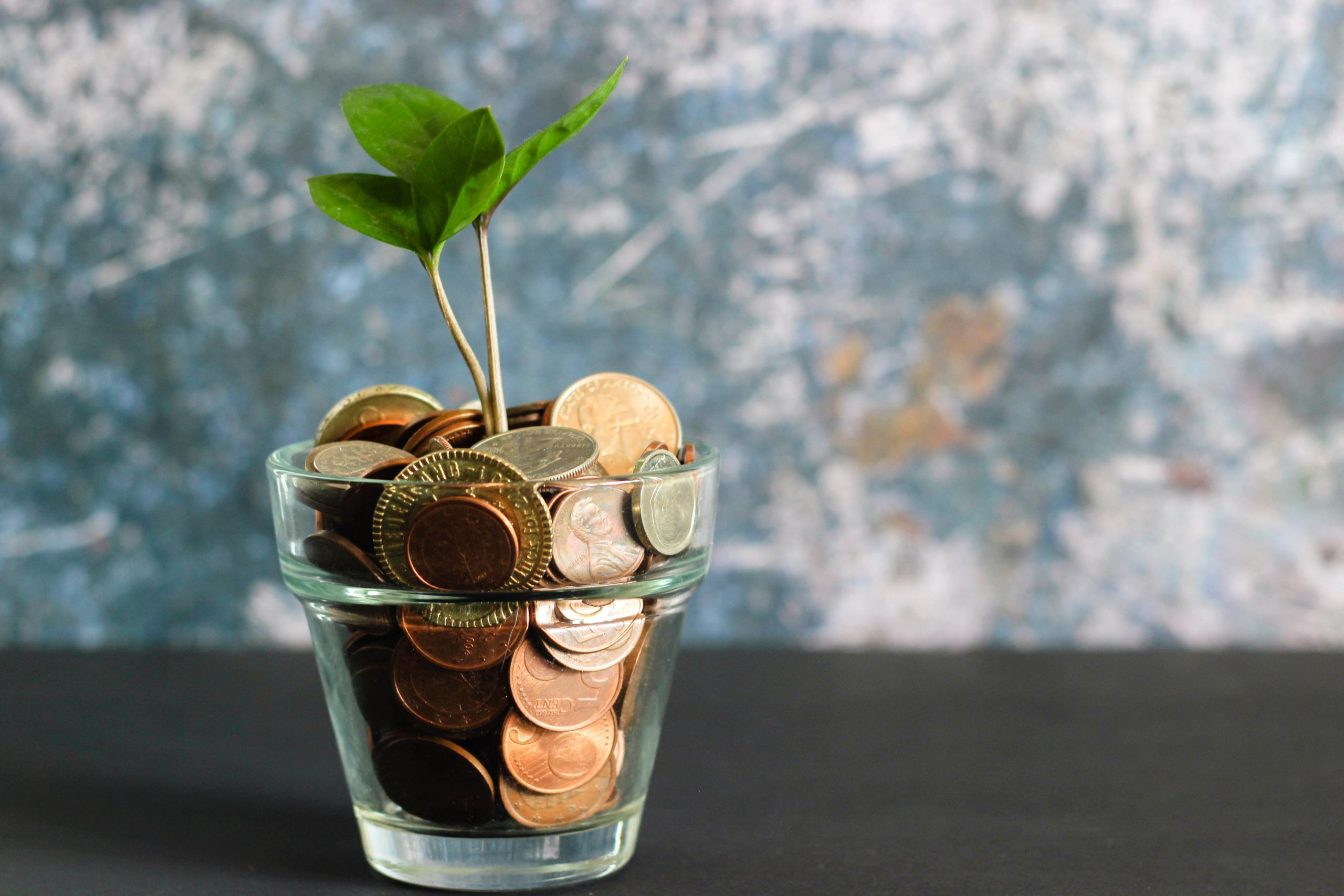 Foto von Micheile Henderson - green plant in clear glass vase
